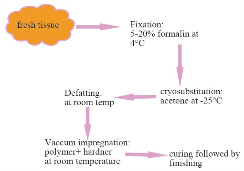 Figure 1: Flow diagram depicting the steps in plastination process