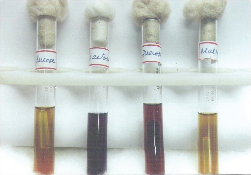Fermentation of Yeast and Sugar http://www.jomfp.in/article.asp?issn=0973-029X;year=2011;volume=15;issue=2;spage=182;epage=186;aulast=Jeddy