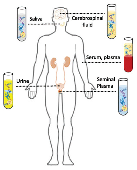Figure 1: Circulating molecules in various biological fluids<sup>[4]</sup>